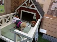 ペットと楽しむ庭づくり 横浜 YAMASO