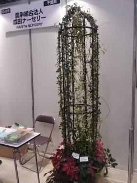つる植物 横浜