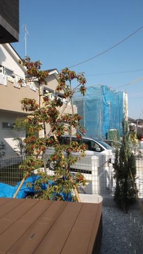 横浜緑区外構工事 植栽
