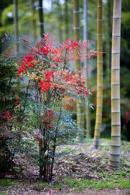 ナンテン 樹の全体写真